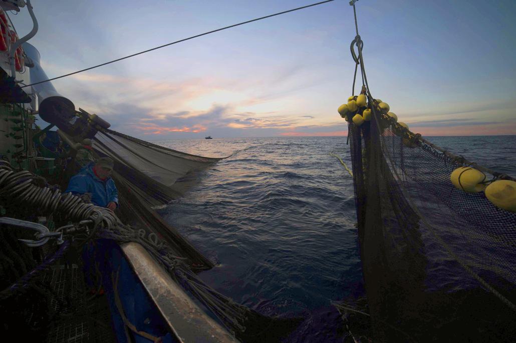 Pesca de la anchoa con redes