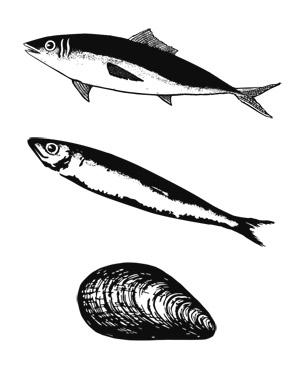 Atun sardina y mejillon