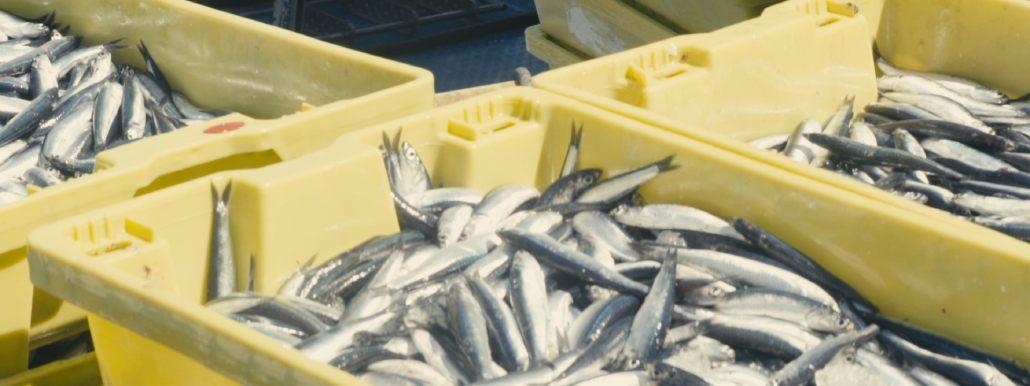 Vitamina D pescado azul